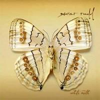 Xavier-Rudd-White-Moth.jpg